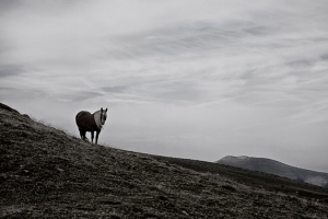 Horse stands on the windy ridge of the Pryenees Mountains